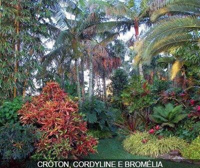 Momentum blog o colorido das folhas no jardim - South florida vegetable gardening ...