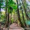 Doses caprichadas de natureza nas fotos da @anitebspicx 🍃🌿🌱🌳 Tá esperando o que pra conhecer a Trilha da Cachoeira?