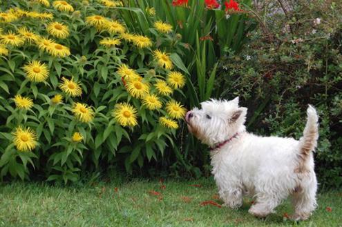 Jardim para pets: Saúde e bem-estar para o seu bichinho de estimação
