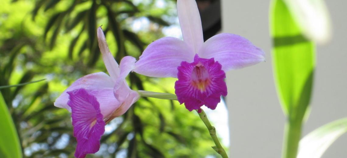 Primavera traz esplendor das flores das orquídeas