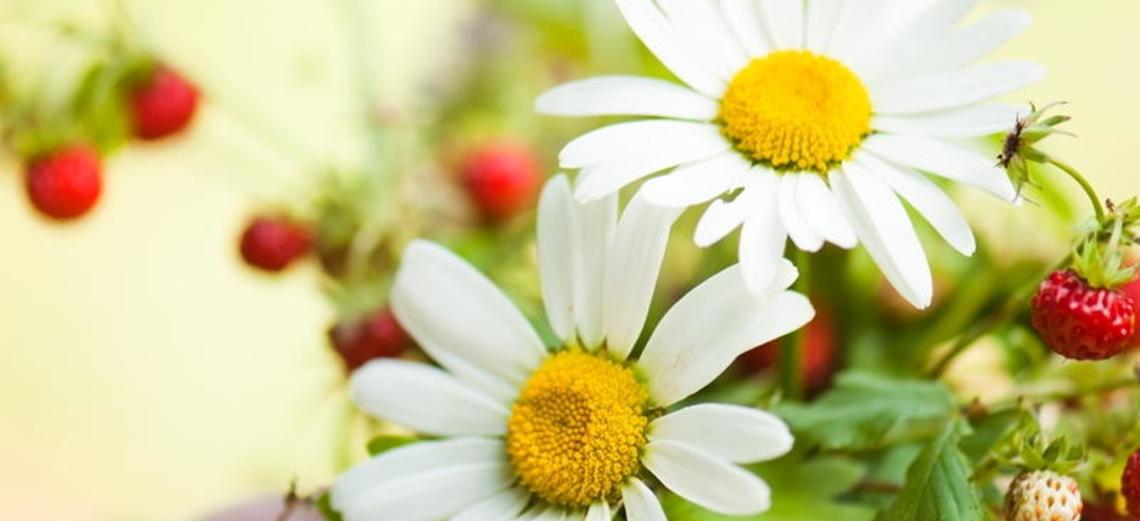 Jardins comestíveis, aprecie e deguste!