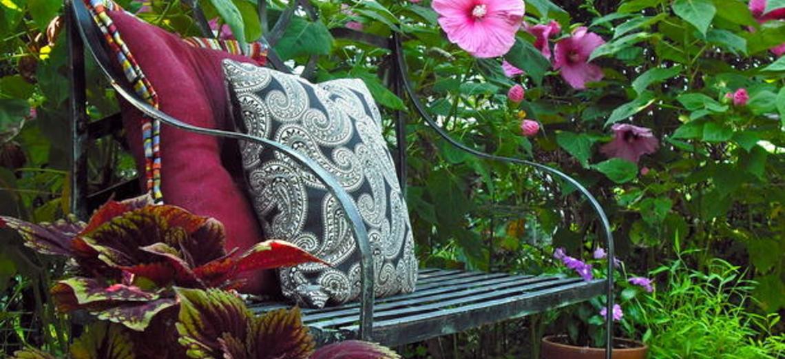 Hibisco e ixora: flores-curinga do jardim
