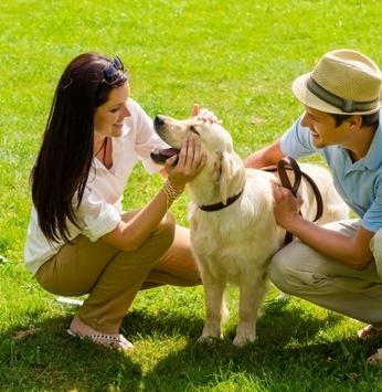 Cuidados com o seu pet durante a temporada de festas