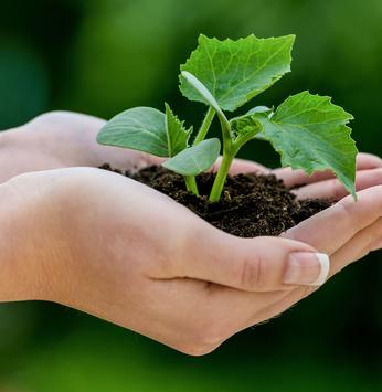Momentum é certificada com a ISO 14.001 - Gestão Ambiental