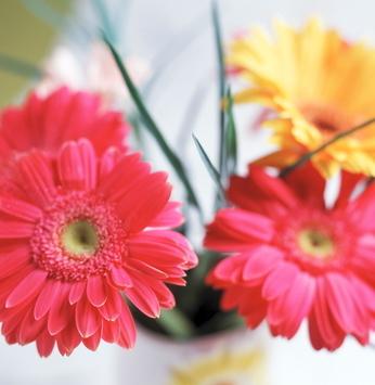 Cultive flores de outono para alegrar o ambiente