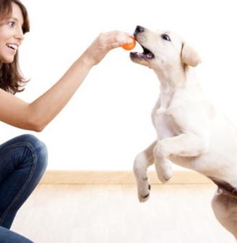 Dicas animais pra você brincar ainda mais com seu cão!