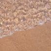 Água doce, pé na areia... Quer jeito melhor de começar o dia do que pertinho da Represa Jurumirim, aqui na Riviera IV? 🌊