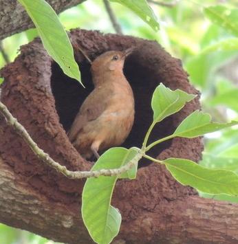 O prazer do convívio com a fauna e a flora nos empreendimentos