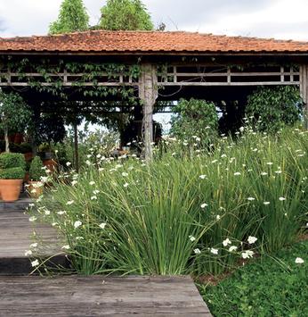 Enfeite seu jardim com moreias