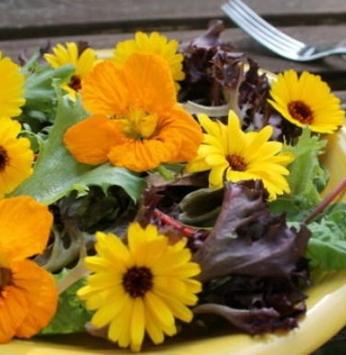 Flores: do jardim para a culinária