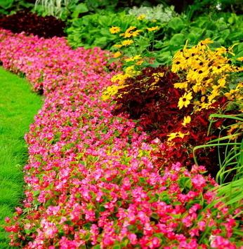 Jardins com cores fortes