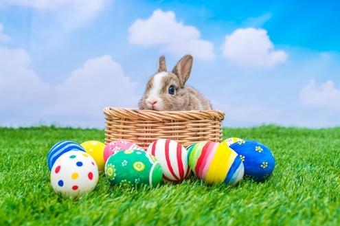 Os empreendimentos da Momentum vão deixar a sua Páscoa mais doce