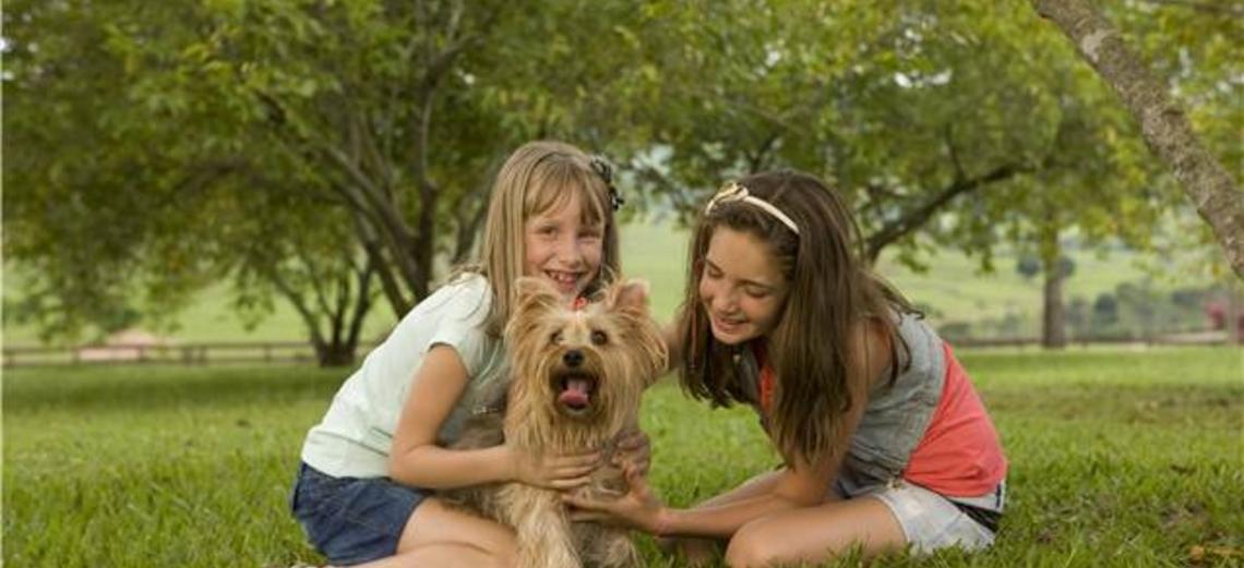 Os benefícios dos animais de estimação
