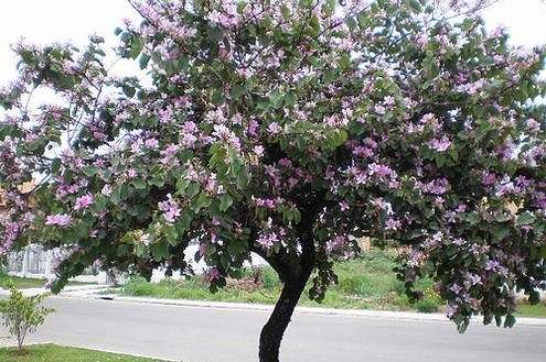 Árvores no quintal: porque nem só de flores vive o seu jardim