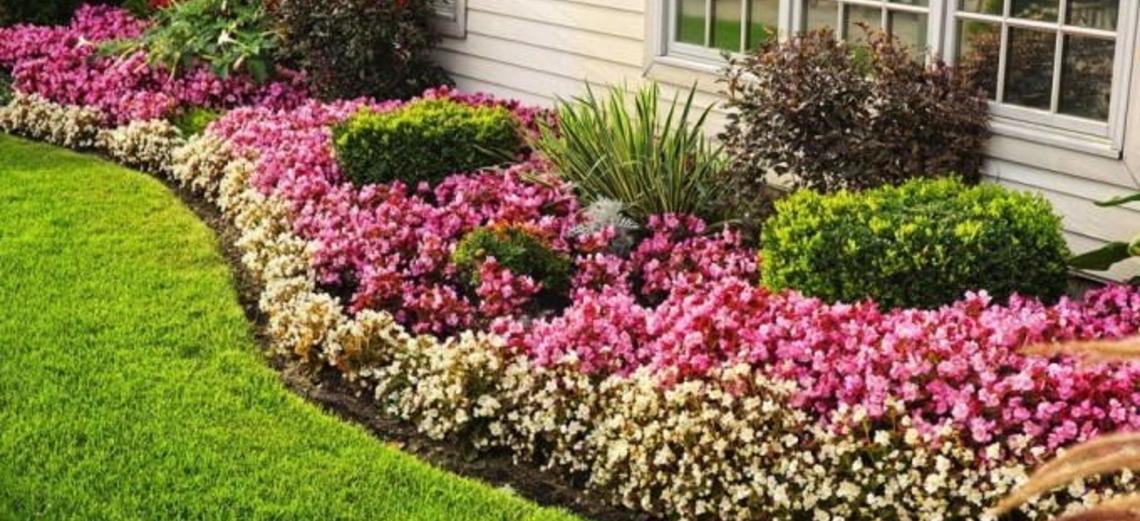 Saiba como escolher suas plantas na hora da compra