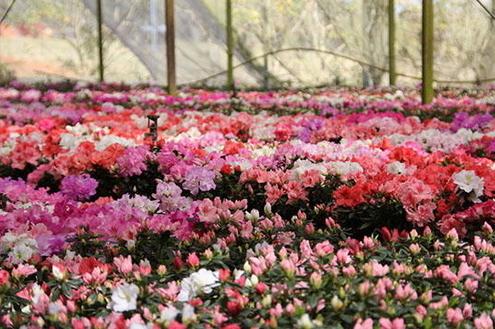 Caminho das flores e frutas em Campos de Holambra