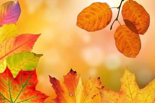Nos empreendimentos da Momentum, o outono não é sempre igual