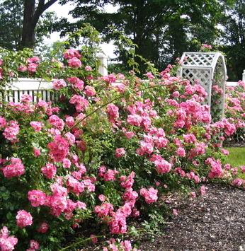 Uma cor só: a ideia do jardim monocromático