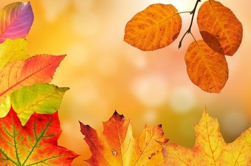 No Terras de Sta. Cristina V, o outono não é sempre igual