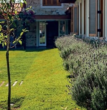Plantas repelentes: o paisagismo ajudando no seu bem-estar