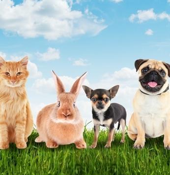 Blog Permita-se Viver agora conta com nova seção: Mundo Pet