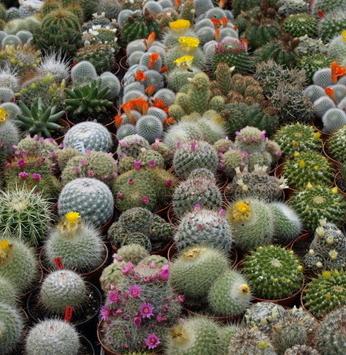 Tipos de plantas que dispensam muita água