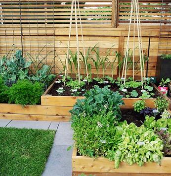 Horta caseira em espaço pequeno