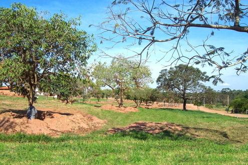 Replantio de árvores na Riviera de Santa Cristina XIII