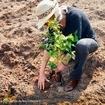 Plantar uma árvore é cuidar do futuro. E nesta semana comemoramos o #diadaárvore em grande estilo aqui no Santa V 💚 Proprietários e moradores plantaram mudas de árvores frutíferas, doadas pela @momentumempreendimentos, aqui no empreendimento 🌳