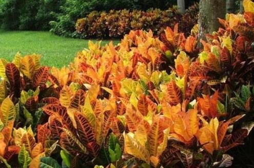Folhagens coloridas