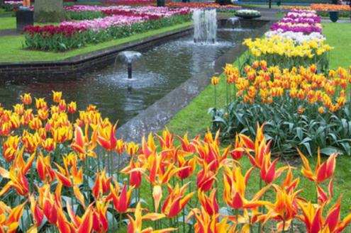 Verão: a estação das flores