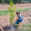 """Jabuticabeiras, amoreiras, mangueiras, goiabeiras... em breve teremos essas e muito mais frutas aqui no SBRR! 💙 Na semana passada, em comemoração ao Dia das Crianças, alguns proprietários no Santa Bárbara plantaram 72 árvores frutíferas em um espaço reservado para plantio, no final da Trilha da Cachoeira. A iniciativa foi do grupo de moradores """"Águas em Ação"""" e contou com o apoio das equipes de manutenção do empreendimento, que supervisionaram desde o preparo do terreno até a primeira rega, realizada pelas crianças presentes. Arrasta pro lado pra conferir as fotos 👉🏼👉🏼👉🏼"""