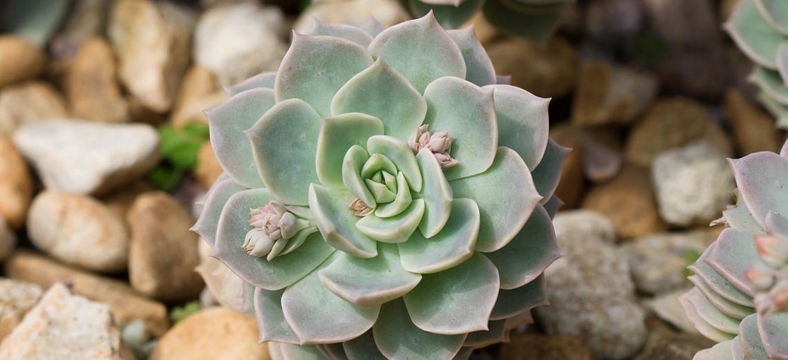 Suculentas: charme para os jardins de quem tem pouco tempo para cuidar deles