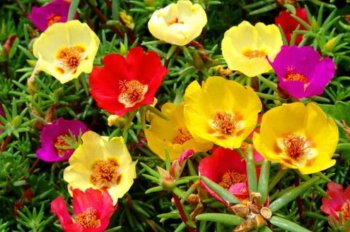Plantas que requerem pouca rega