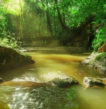 Curiosidades sobre as trilhas ecológicas do Ninho Verde II que você precisa saber